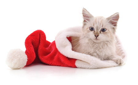 Kitten in Christmas hat isolated on a white background.