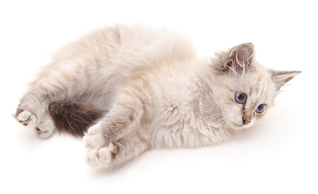 White fluffy cat isolated on a white background. 스톡 콘텐츠