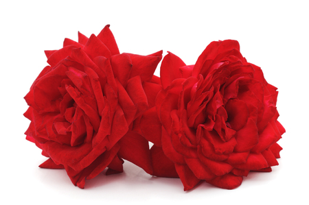 Two red roses isolated on a white background.
