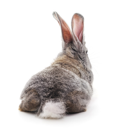 The back of a gray rabbit isolated on a white background. Фото со стока