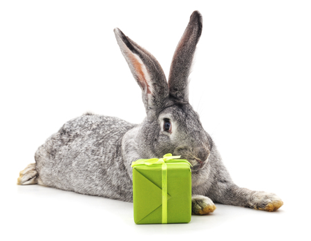 Grey rabbit and gift isolated on a white background. Фото со стока