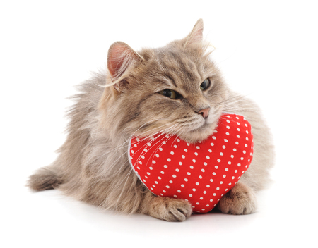Cat and red heart isolated on a white background.