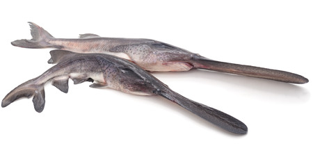 Two raw paddlefish isolated on a white background.