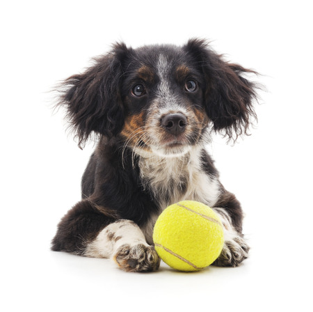 Small puppy with ball isolated on a white background. Foto de archivo