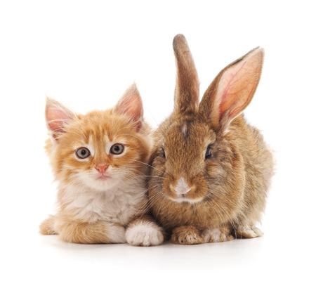 Chaton rouge et lapin sur fond blanc.