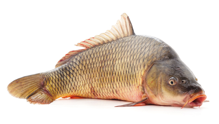 One raw fish isolated on a white background.