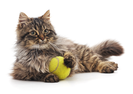 Cat and ball isolated on a white background. Reklamní fotografie
