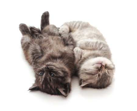 Two sleeping baby kittens isolated on a white background.
