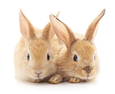 Two beautiful rabbits isolated on a white background. Фото со стока
