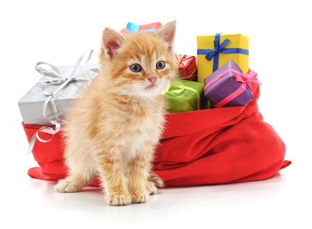 Kitten and bag with gifts isolated on a white background.