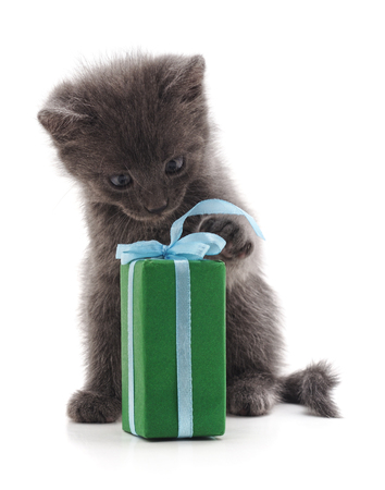 Kitten and gift isolated on a white background. Stock Photo