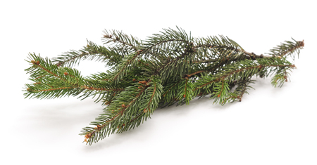 Fir tree branch isolated on a white background. Imagens