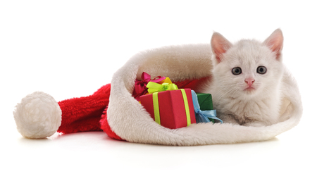 Kitten with Christmas gifts isolated on a white background.