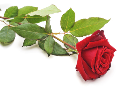One red rose isolated on a white background. Imagens - 114217327