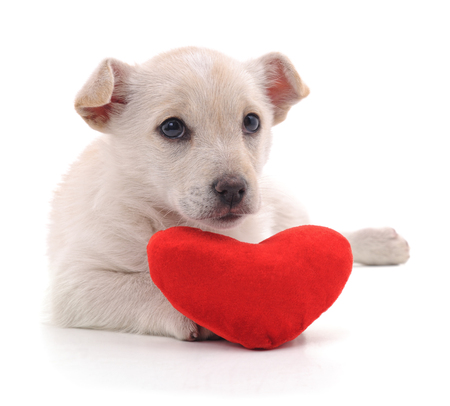 Puppy with heart isolated on a white background.