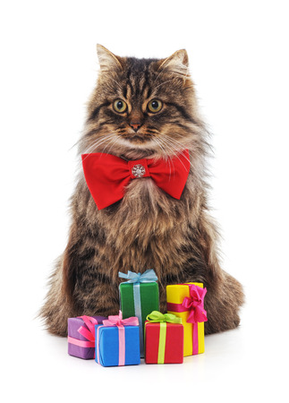 Cat in bowtie with gifts isolated on a white background.