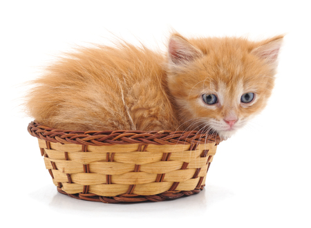 Red cat in a basket isolated on a white background.
