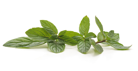 Leaves of green mint isolated on a white background. Standard-Bild - 115309099
