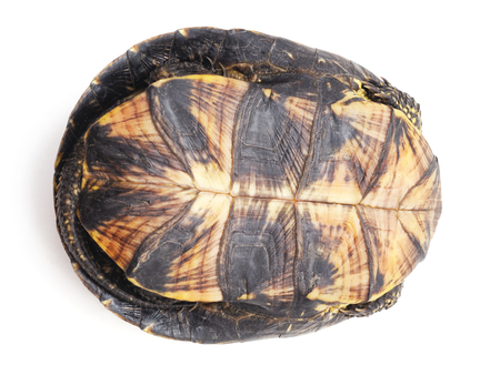 One big turtle isolated on a white background. Standard-Bild - 115309101