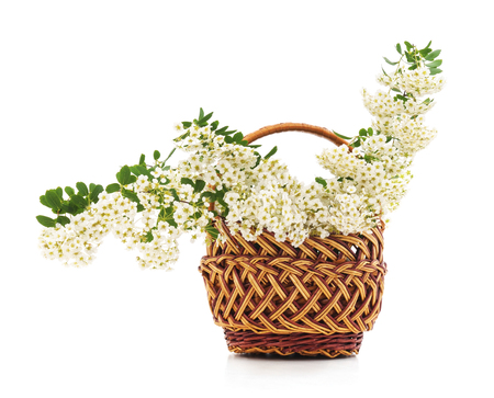 White flowers in a basket on a white background. Standard-Bild - 115309102