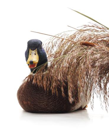 Wild ducks around the cane isolated on a white background. Standard-Bild - 115309123