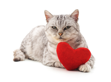 Cat with toy heart isolated on a white background. Standard-Bild - 115309125