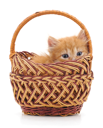 Small kitten in a basket isolated on a white background. Standard-Bild - 115309146