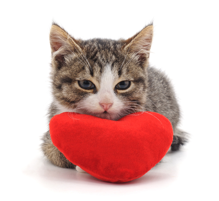 Cat and red heart isolated on a white background. Standard-Bild - 115309149