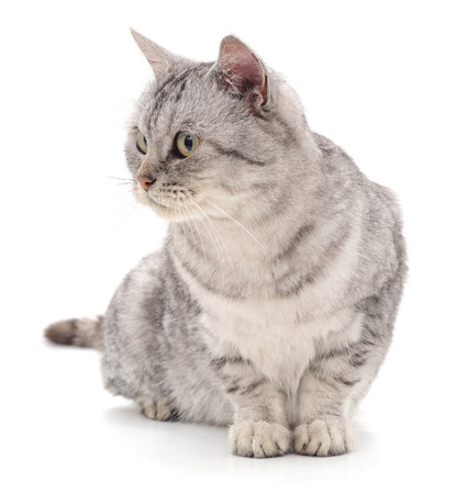 Gray beautiful cat isolated on a white background. Standard-Bild - 115309152