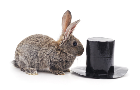 Brown rabbit and cylinder isolated on a white background. Standard-Bild - 115309155