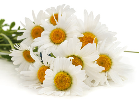 Bouquet of white chamomile isolated on a white background. Standard-Bild - 115309169