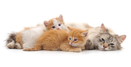 Cat with kittens isolated on a white background. Standard-Bild - 115309172