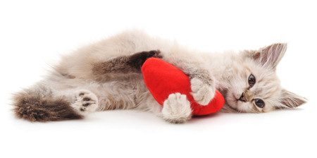 White cat and red heart isolated on a white background. Standard-Bild - 115309199