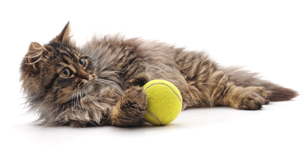 Cat and ball isolated on a white background. Standard-Bild - 115309203