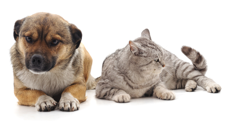 Puppy and kitten isolated on a white background. Standard-Bild - 115309204