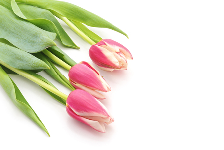 Bouquet pink tulips isolated on a white background. Standard-Bild - 115309211