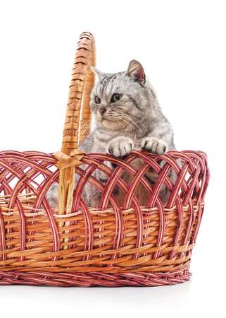 Cat in a basket isolated on a white background. Standard-Bild - 116057150