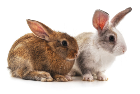 Two beautiful rabbits isolated on a white background. Standard-Bild - 116057177