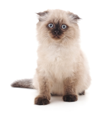Beautiful kitty with blue eyes isolated on a white background. Standard-Bild - 116057178
