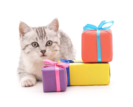 Cat with a gifts isolated on a white background. Standard-Bild - 116057179