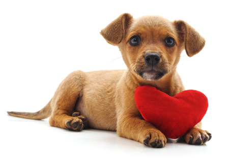 Puppy with heart isolated on a white background. Standard-Bild - 116057184