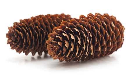 Two pine cones isolated on a white background. Standard-Bild - 116057208
