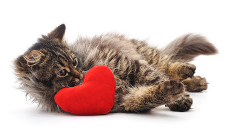 Cat and red heart isolated on a white background. Standard-Bild - 116057213