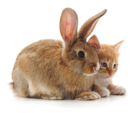 Red cat and rabbit isolated on a white background. Standard-Bild - 116057214