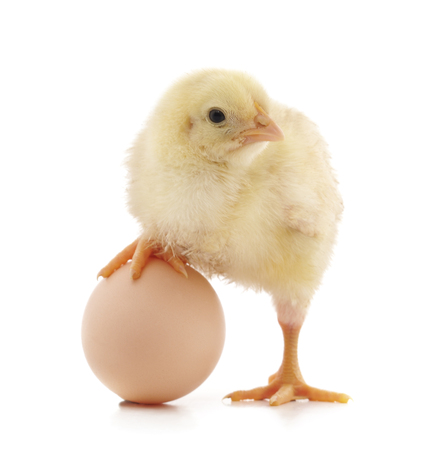 Chicken and egg isolated on a white background. Standard-Bild - 116057223