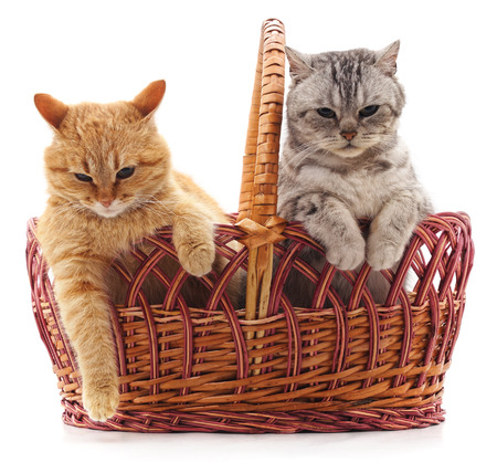 Two kittens in a basket isolated on a white background. Standard-Bild - 116057272