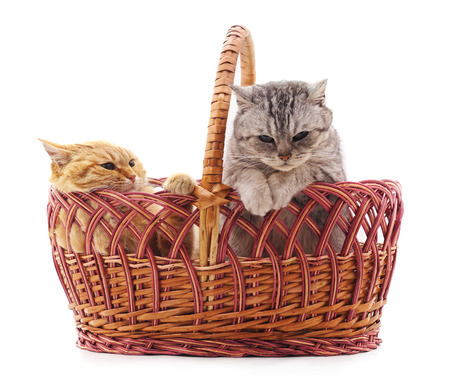 Cats in a basket isolated on a white background. Standard-Bild - 116057273