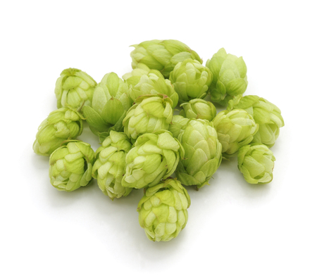 Green fresh hop isolated on a white background. Standard-Bild - 116057275