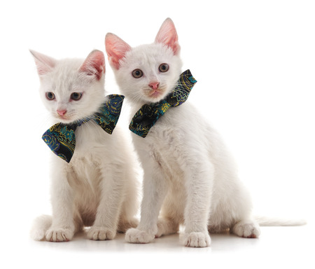 Two white cat isolated on a white background. Standard-Bild - 116057288