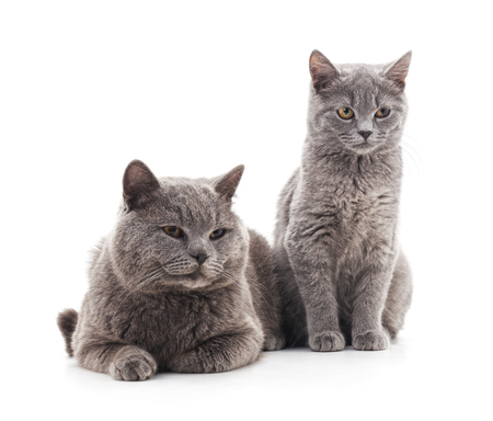 Cat and kitten isolated on a white background. Standard-Bild - 116057291
